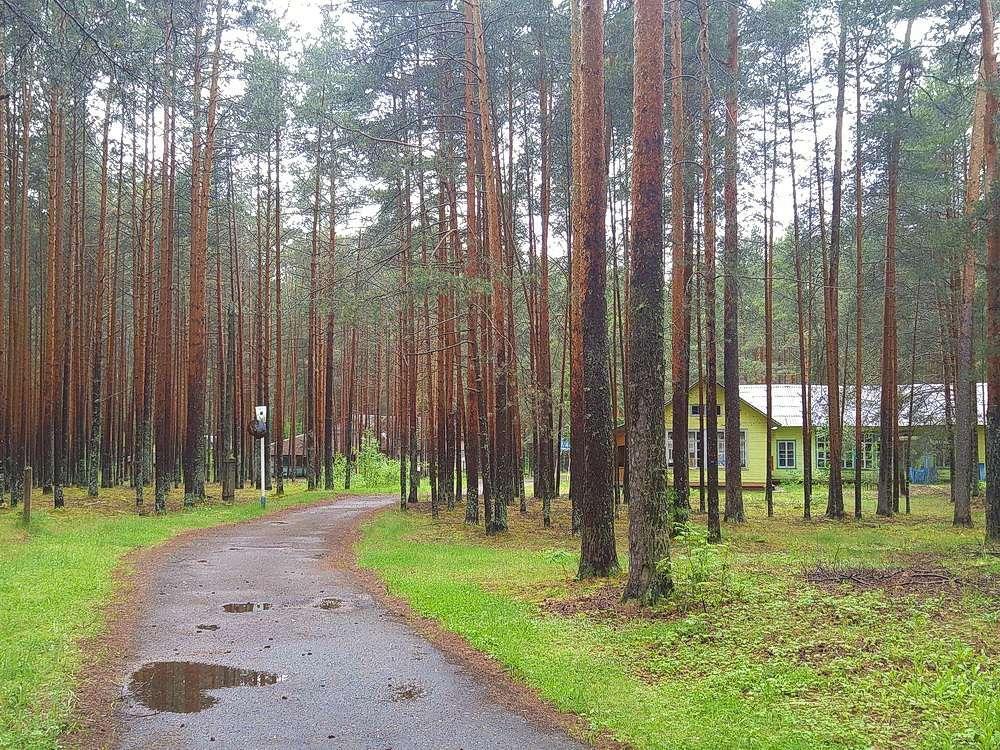 Продажа бизнеса лес работа в междуреченске свежие вакансии центр занятости